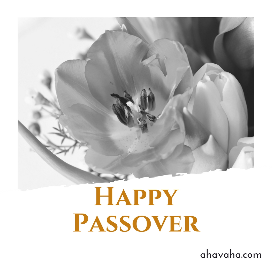 Happy Blessed Passover multicolored greeting cards square image 5
